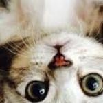 Zdjęcie profilowe joasia7d