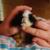 Zdjęcie profilowe Amici
