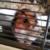 Zdjęcie profilowe Hamster123