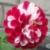 Zdjęcie profilowe KlaudiaMelson