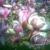 Zdjęcie profilowe Wanda